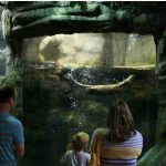 Family Pack to Oklahoma Aquarium (JENKS, OK) Item Number 109